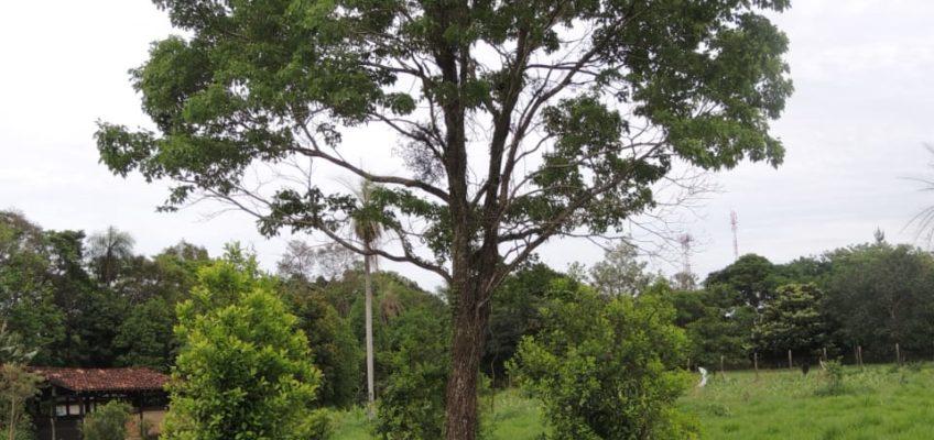 Ślady pod Krzyżem Południa – Zielone złoto w Paragwaju