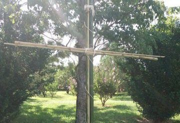 Ślady pod Krzyżem Południa – Wierzba płacząca